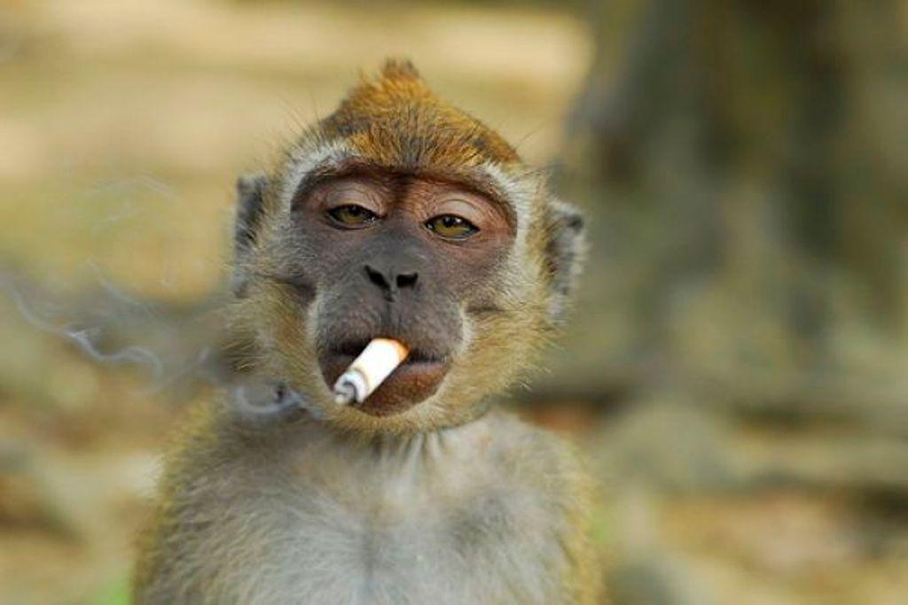Ален карен лгкий способ бросить курить