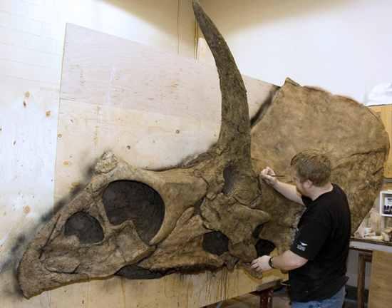 mark eotriceratops0041 1 10 Dinosaurus Bertanduk Paling Menakjubkan