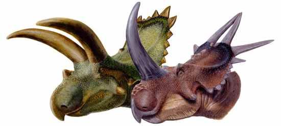 e0080784 4c011830ef28d 10 Dinosaurus Bertanduk Paling Menakjubkan