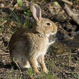 Relaxation l 39 ecole 2 le bateau bleu rencontre des lapins for Dans la foret un grand cerf regardait par la fenetre