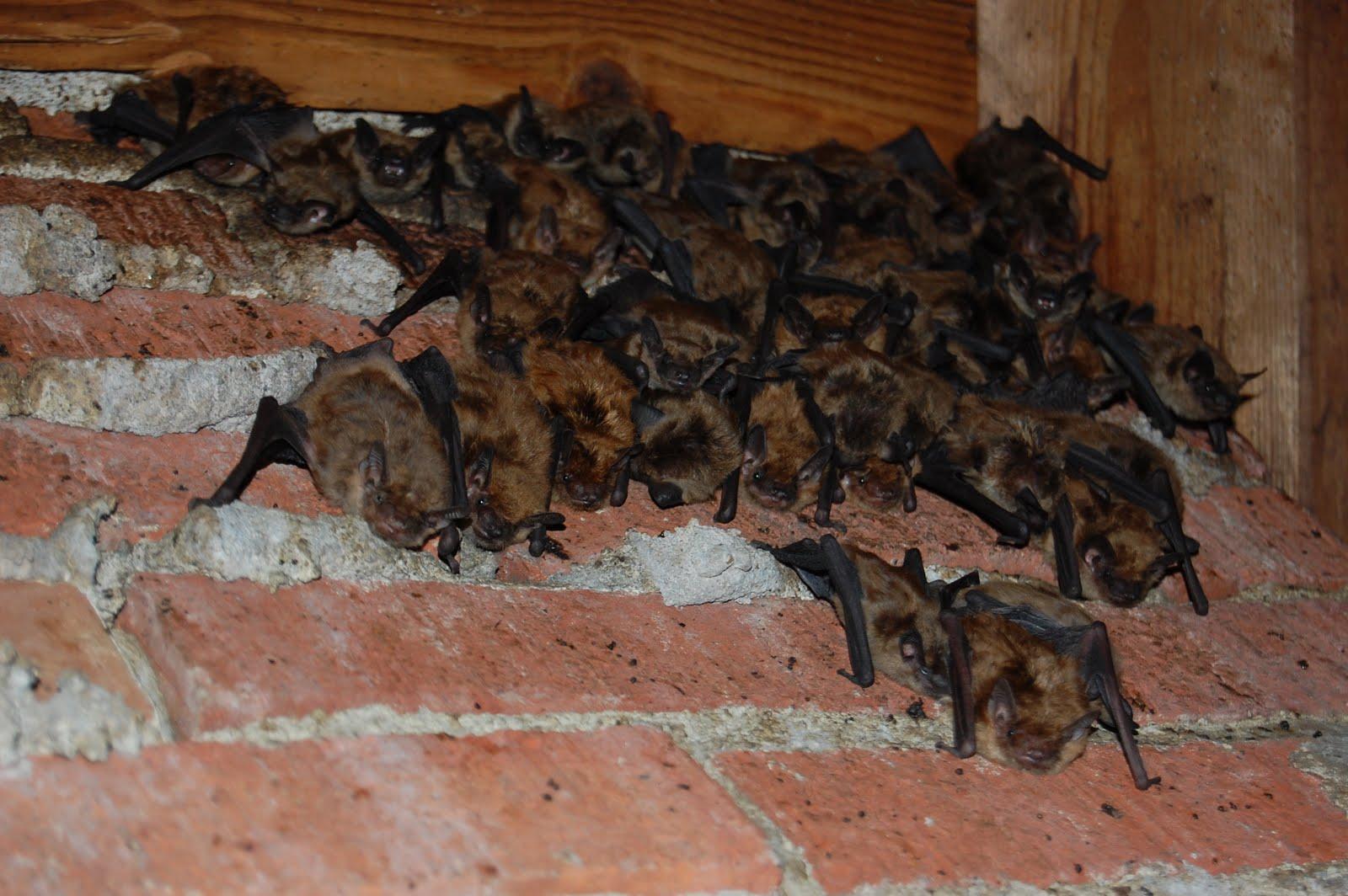 Animal Problems In Cincinnati Ohio