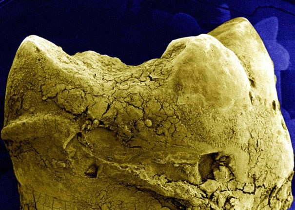 El Mundo al Microscopio