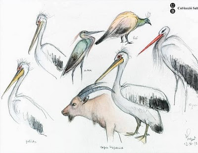 sketch of pelicans