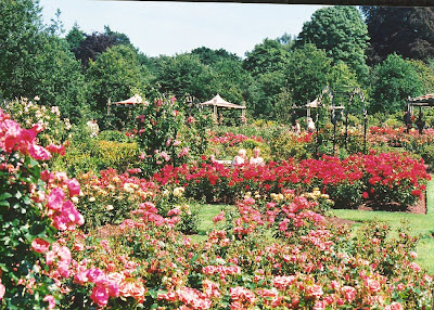 Most Beautiful Rose Gardens In The World the most beautiful rose gardens | travelization