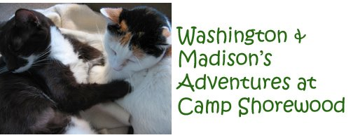 Washington & Madison's Adventures at Camp Shorewood
