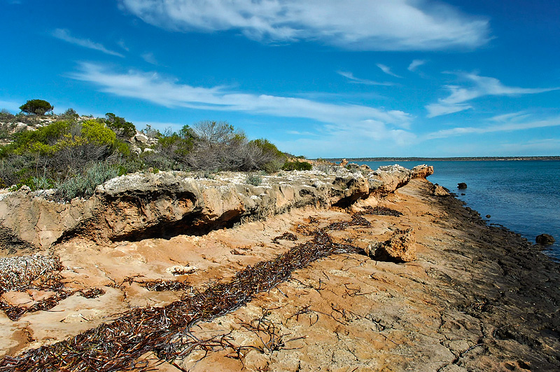Shark Bay Australia Seagrass Shark Bay of Western Australia