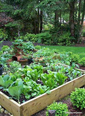 Up A Vegetable Garden - 2