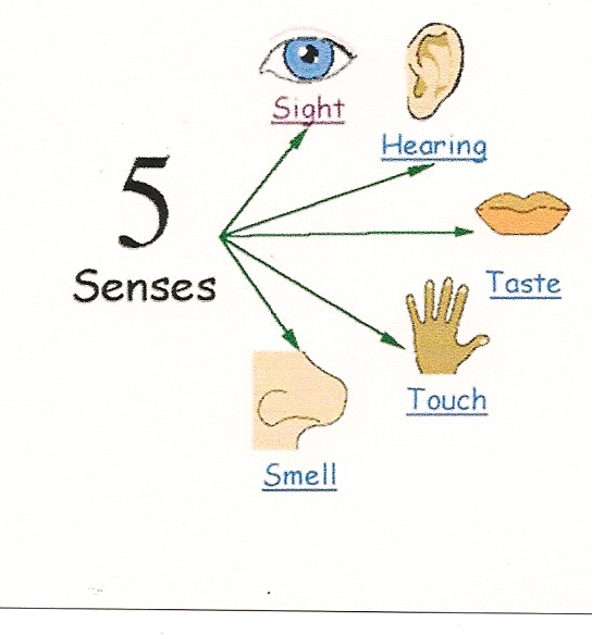 examples of descriptive writing using 5 senses