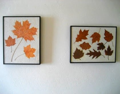Fall leaves pressed and framed