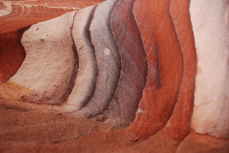 El color de Petra