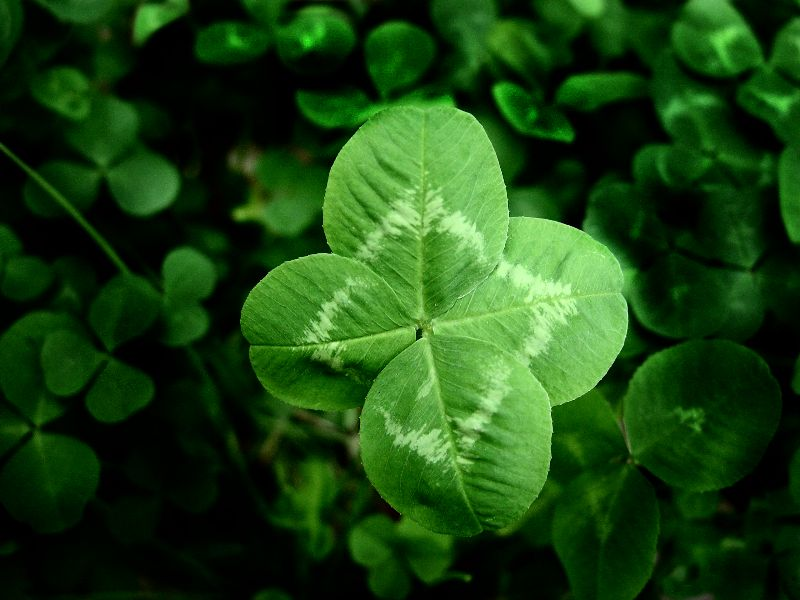 four leaf clover tattoo designs. Four-leaf-clover Tattoos Irish