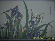 50.Irisi 17,5x25cm