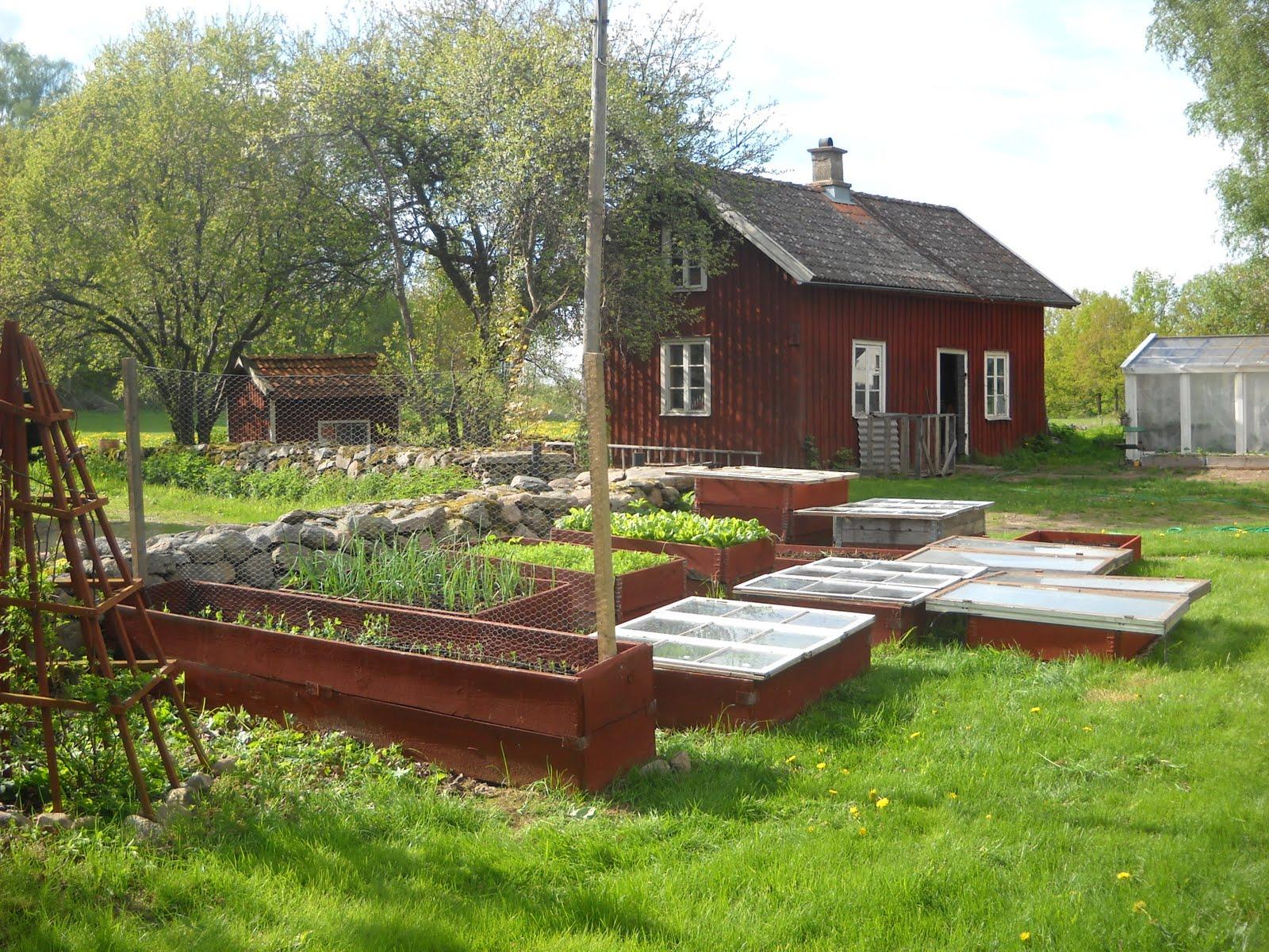 Växthus Odla : Vårat Äleberg maj