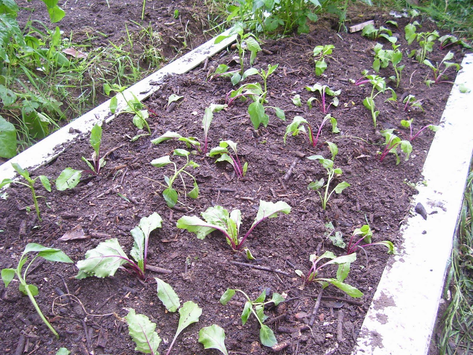 la plaza de mertesaker plantar r banos primera