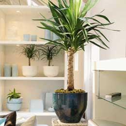 Jardines de prosperidad las plantas de interior for Plantas de interior altas