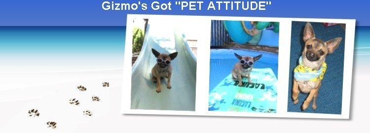 """Gizmo's Got """"Pet Attitude"""""""