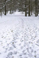 Snow Run in Tower Grove Park