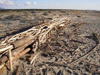 Fascinata costruita dagli studenti per facilitare il ripascimento delle dune