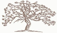 old apple tree antique drawing