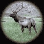 Elk in gunsight color photograph