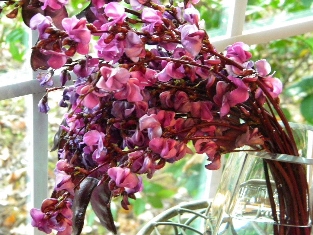 Wedding Flowers from Springwell: Hyacinth Bean Vine In Its Glory