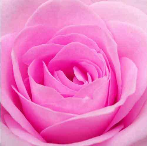 Cinta tidak harus berwujud bunga