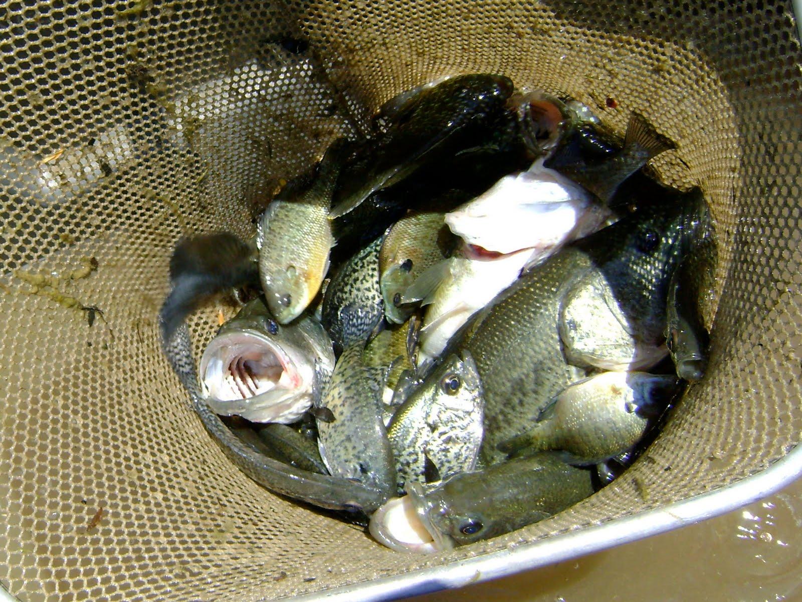 Herman brothers blog electrofishing rain electrofishing for Pond depth for fish