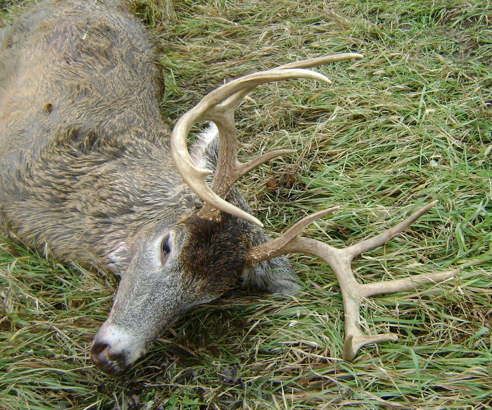 silver edition deer feeders photos hoarders banquet boss brown feed hero cooper feeder potts horn gopro store buck banner