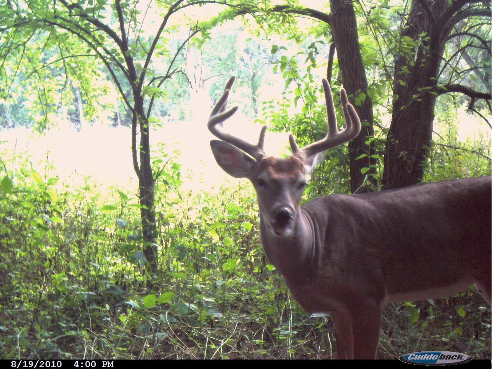 feeders gallery galleries cameras video feeder boss cuddeback photo scouting deer buck