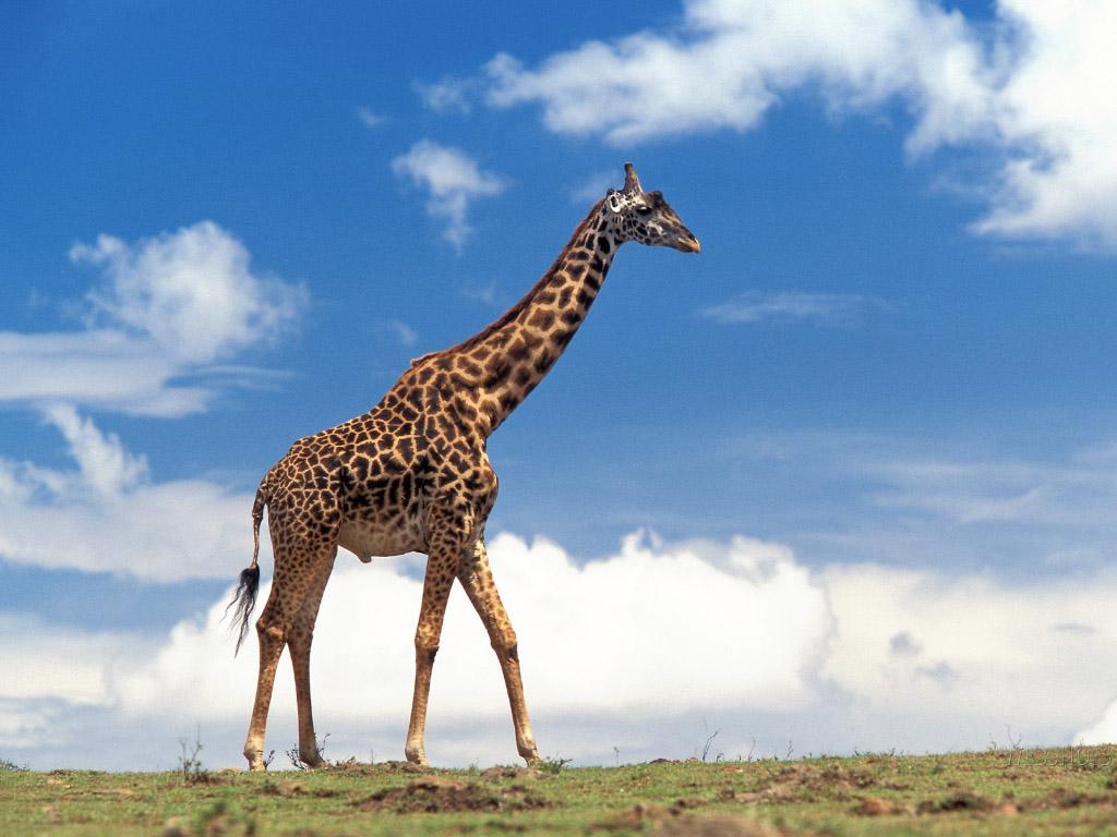 10 Hewan yang di Pergunakan untuk Mitos [With PIC]