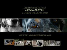 Murcia Adopta