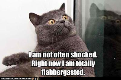 flabbergasted+cat.jpg