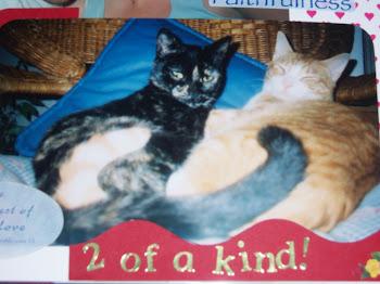 Kitty Cuddles ... In Loving Memory of Lewis