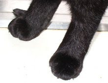 the kitty paws series... #2
