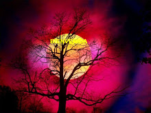 Luna Caliente