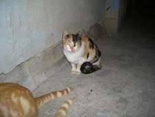 S.O.S.Esta gata esta en la calle es cariñosa