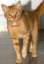 Adopta a un gato de un refugio