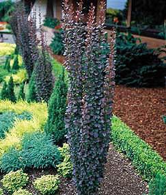 carlyklock diy landscaping