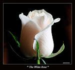 .. الزهرة من القلبي ..