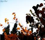 Y, al igual que las hojas en el otoño, terminaremos cayendo.
