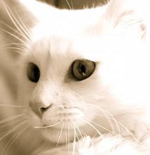 Los gatos... Tengo-una-obsecion-x-los-gatos