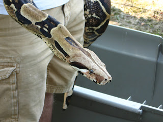 Trouser Snakes http://katdocsworld.blogspot.com/2008/08/tortoises-lizards-and-snakes-oh-my.html