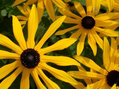 Medicina Emozionale di regolazione e Floriterapia