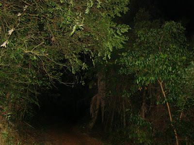 http://1.bp.blogspot.com/_qogGKWhFKM8/SmxpZWdxnQI/AAAAAAAAADQ/0-ZDoiLMrjg/s400/hutan+seram+3.jpg