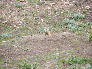 Prairie Dogs, South Dakota