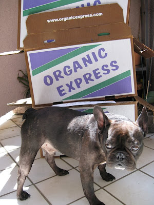 organic express and french bulldog
