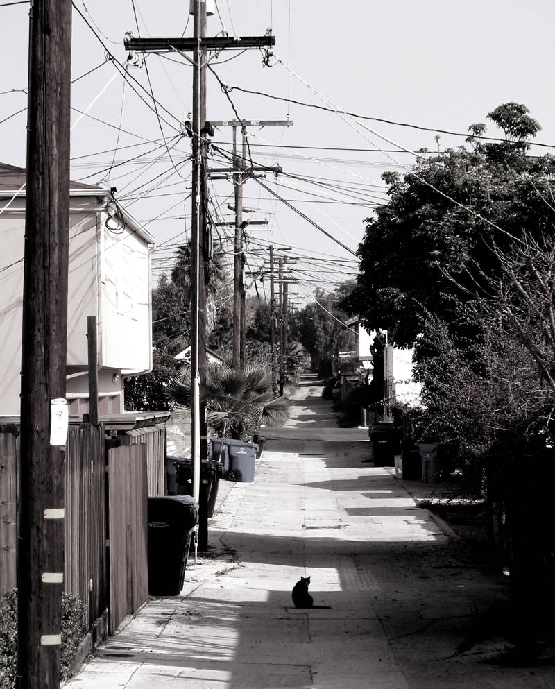alley cat; click for previous post