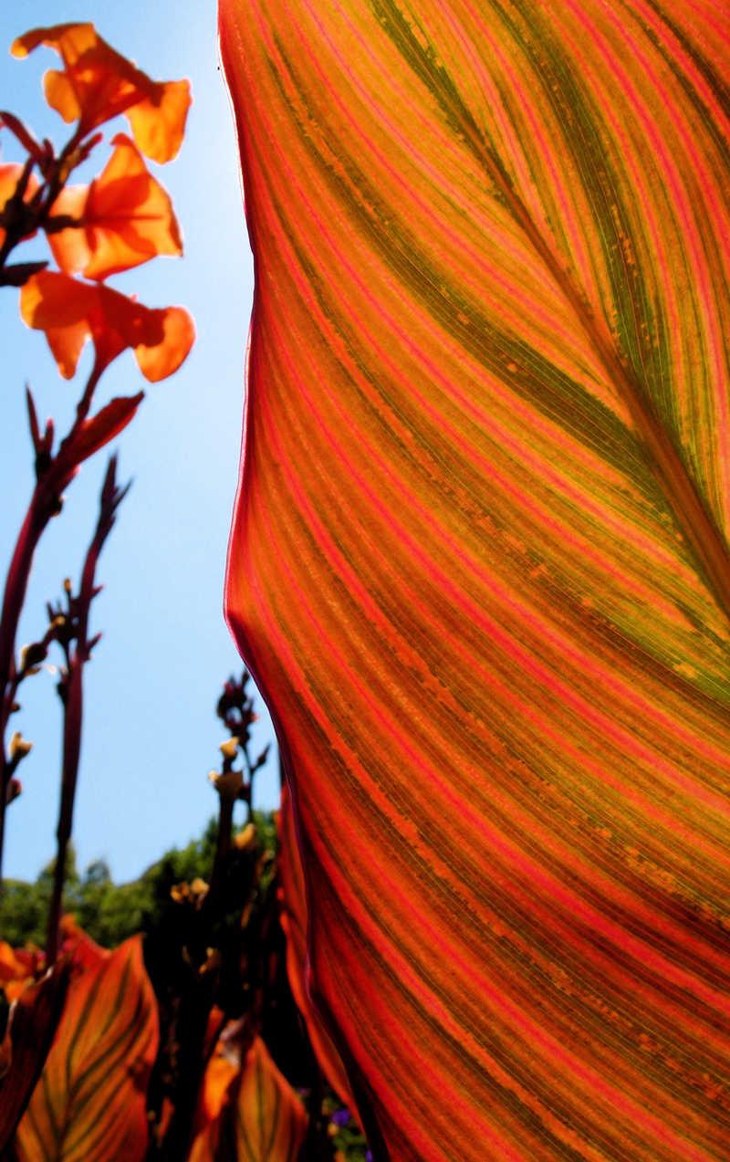 orange leaf; click for previous post