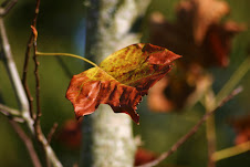 burnished leaf