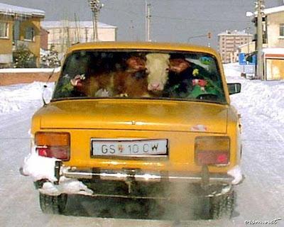 Komik araba resimleri modifiye araba